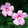 神代植物公園の今咲いている花