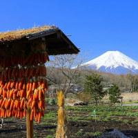忍野村から眺る富士山