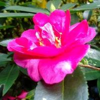 11/25(金)、「寒蘭展」と花の文化園の花々!