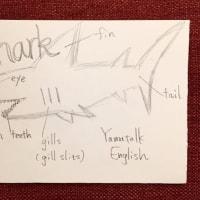 42音で海の生き物の続き~サメ!~