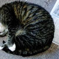 お天気がいい朝も、猫たちはやっぱりよく眠れますぅ~♪
