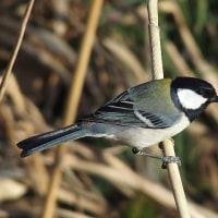 散歩で出合った野鳥たち