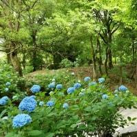 恋野紫陽花園(終)