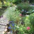初夏の園芸ニュース