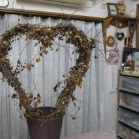 玉ねぎの収穫~~