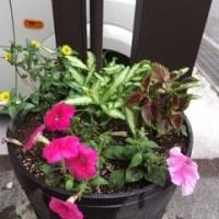 春の植替え
