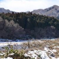 雪の薄葉沢