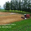 2017年、赤麦の刈り取り終了