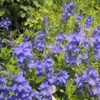 県立花菜ガーデンへ(長いです。すみません!)
