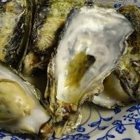 今季初の殻付き牡蠣