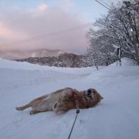 雪旅行2日目