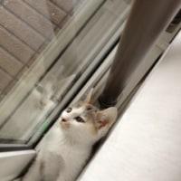 窓際のトットちゃん(違