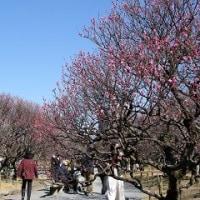 福岡舞鶴公園の早春