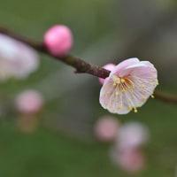 花開く  (Vol.1420)