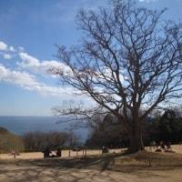 吾妻山公園で遠足気分①♪、(2017睦月)。