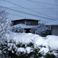 ♫ 寒 い 朝 ♫