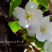 haruよ恋~♪