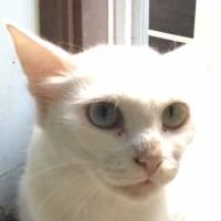 7・8月の白猫一家