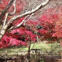 キャバちゃんに会えました(*^_^*)@鎌倉中央公園