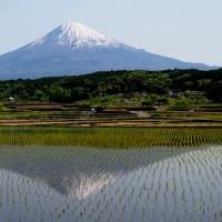 静岡県・富士宮市の「上柚野の棚田」