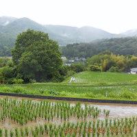 第32回ウエルネスウォーキングは、小雨の中、とよの歴史探訪~吉川編~
