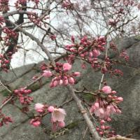 春はすぐそこ・・