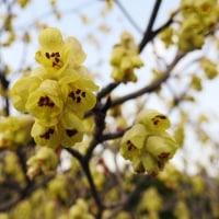 黄色の花は元気っ子