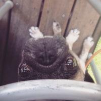 狂犬病予防注射2015