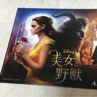 364 ディズニーストア×くまのプーさん×マグネットクリップ+映画半券プレゼント(モアナ、美女と野獣)。