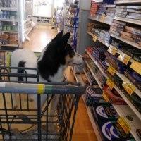 お買い物監視人(犬)