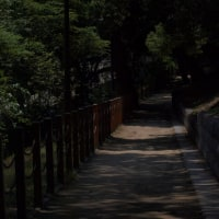 舞鶴公園 けやき通り側お濠の傍にて