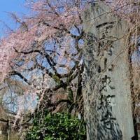 桜咲く、春