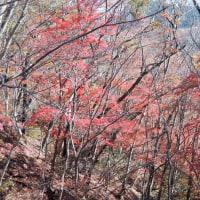 鍋足山(2016年11月22日)-1