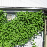 家具修理は 飛騨シラカワのダイニングテーブルのリメイク 32-3