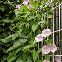 梅雨を迎える花