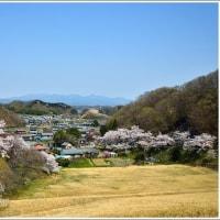 「大 塩 湖」 の 桜   (1の1)  ★ 2017.04.29 ★
