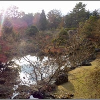 image2287 師走の公園