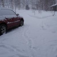 水分多めの雪が降っています。