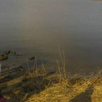 神西湖一斉清掃