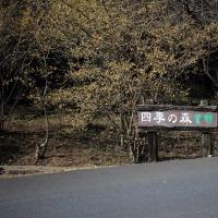 栃木 四季の森 節分草2017