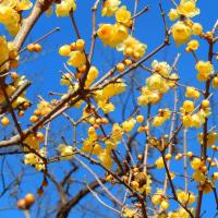 昭和記念公園冬の花