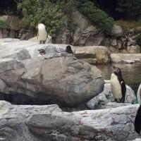ズーラシア動物園ブラリン