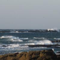29年1月22日 AM 南西の強風~ PM 明日は・・・朝の判断かな