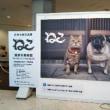 沖縄初のねこ展*7/22☆岩合光昭さんの写真展へ行ってきました♪