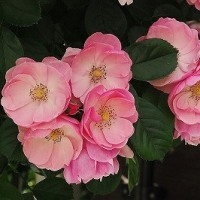 バラ屋敷 4