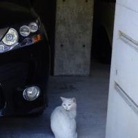 今日の一枚【today's shot】  ネコちゃん (cat)