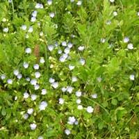 自然農 草花とともに。