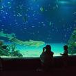癒しのラグーン・マリホ水族館 170706