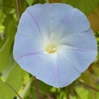 2000-10-22青葉の森01