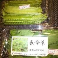 四角豆と長命草